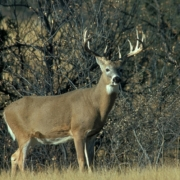 Deer Hunting Essentials blog Gas Station The Store
