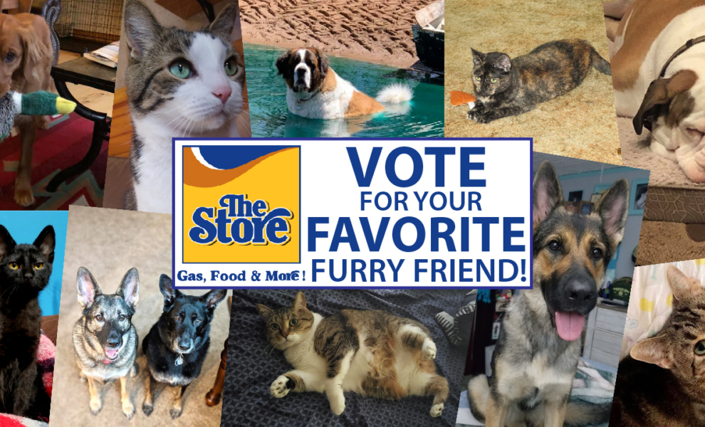 Vote for your Favorite Furry Friend