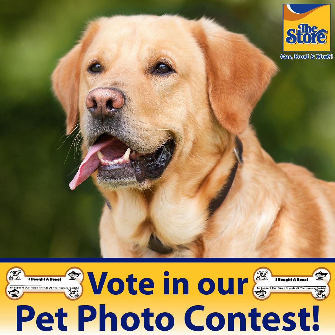 The Store Pet Photo Contest Vote here