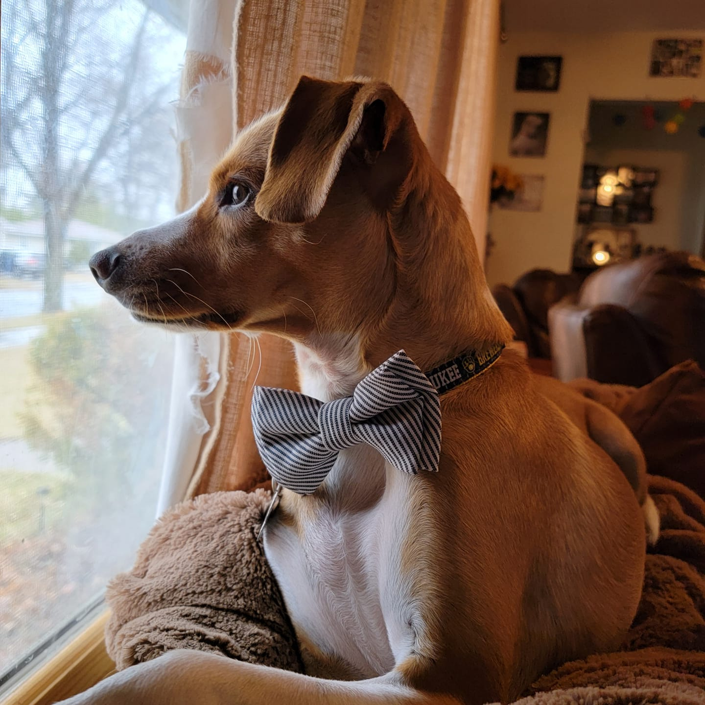 Leonard Benjamin the Dog Vote in Our Pet Photo Contest The Store