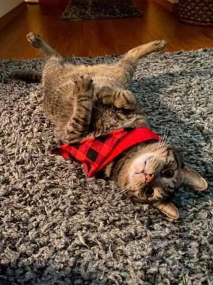 Toby the Cat - Vote in our Pet Photo Contest The Store